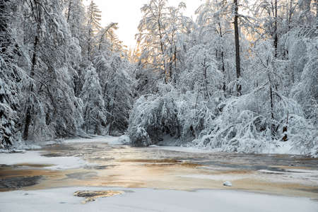 The wild frozen small river in the winter wood, the wild nature at sunset, the river of red color, ice, snow-covered trees Фото со стока