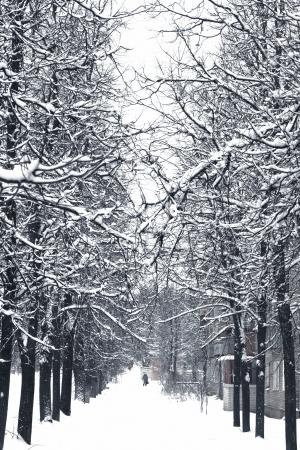 nacked: winter tree