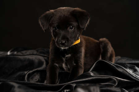 portrait of a little black stret dog puppy in the studio on a black background