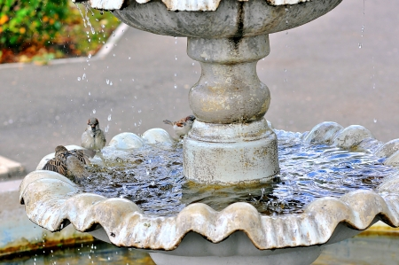 The fountain and the Sparrow photo