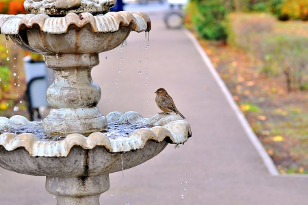 The fountain and the Sparrow Stock Photo - 17165213