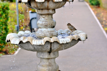 source of iron: The fountain and the Sparrow