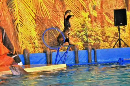 dolphinarium: In Dolphinarium Editorial