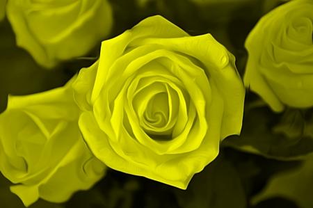 airbrushing: Rose para aerograf�a