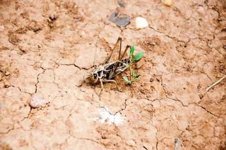 Invasion Locust Stock Photo