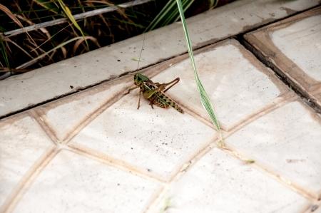 invasion: Invasion Locust Stock Photo