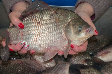 crucian: Fresh and live crucian is sold at the Bazaar