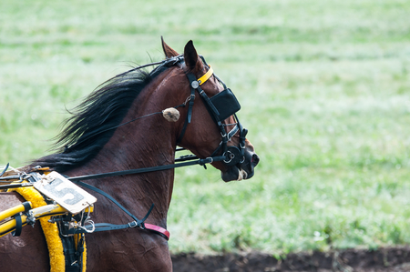 Horse racing is a type of testing horses on playfulness (speed), which concludes on the suitability for further breeding (use the breed). Stock fotó