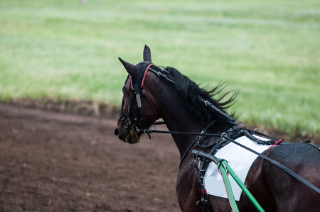 racehorses: Horse on the racetrack in a rainy day