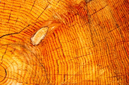 Wood texture in cross section cut a tree trunk Stock Photo