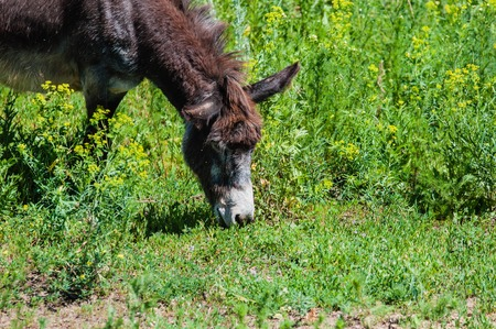 Little donkey outdoors in hot summer day