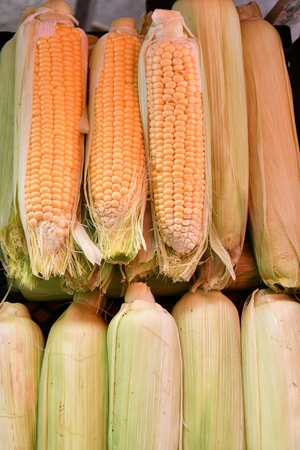 Ripe and fresh corn is sold at the Bazaar