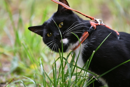 Black and white color cat walking in summer