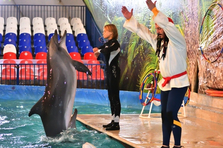 Orenburg, Russia - November 8, 2017 year: show dolphins and beluga whales (LAT. Delphinapterus leucas) in the Dolphinarium