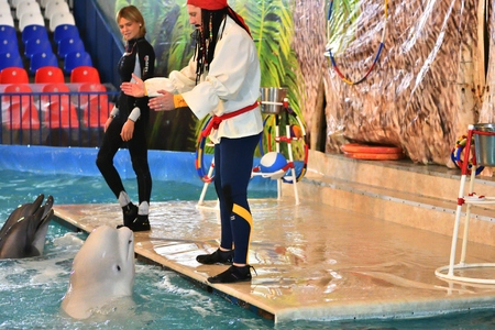 bottlenose: Orenburg, Russia - November 8, 2017 year: show dolphins and beluga whales (LAT. Delphinapterus leucas) in the Dolphinarium