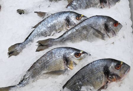 Fresh chilled fish is sold at the Bazaar