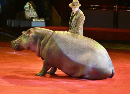 Orenburg, Russia - October 12, 2019: Trainer and hippopotamus in the circus arena 写真素材 - 131742970