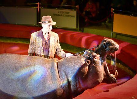 Orenburg, Russia - October 12, 2019: Trainer and hippopotamus in the circus arena