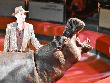 Orenburg, Russia - October 12, 2019: Trainer and hippopotamus in the circus arena 写真素材 - 131742975