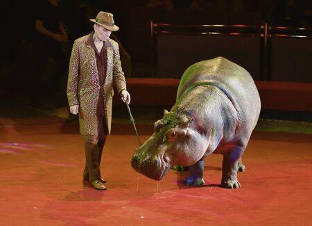 Orenburg, Russia - October 12, 2019: Trainer and hippopotamus in the circus arena 写真素材 - 131742953