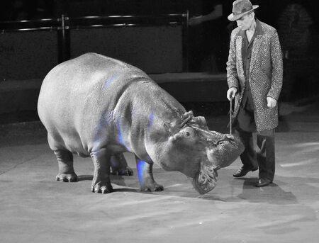 Orenburg, Russia - October 12, 2019: Trainer and hippopotamus in the circus arena 写真素材 - 131742954