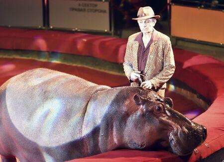 Orenburg, Russia - October 12, 2019: Trainer and hippopotamus in the circus arena 写真素材 - 131742959