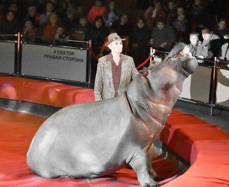 Orenburg, Russia - October 12, 2019: Trainer and hippopotamus in the circus arena 写真素材 - 131742962