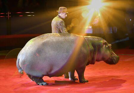 Orenburg, Russia - October 12, 2019: Trainer and hippopotamus in the circus arena 写真素材 - 131742964
