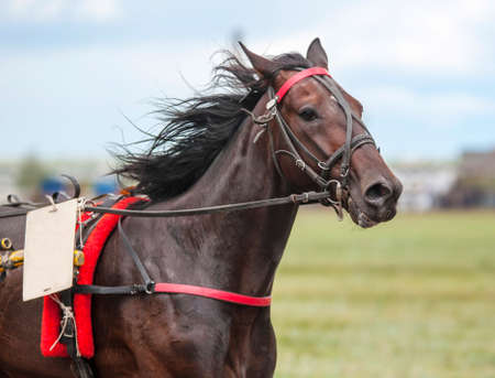 Race horse on the racetrack participates in the prize race Stock fotó