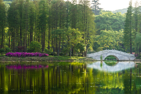 bridge over water: Forest view, calm water, the reflection of the forest, bridge over water. Reflection of the forest by a lake, river. Flowers in the forest, greens, old bridge