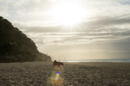 A dog on an empty beach over the evening sunset Stock Photo