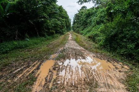 Pfad im Wald. Ein Feldweg mitten in Bäumen und Gras. Pfad im Wald. Straße im Schlamm