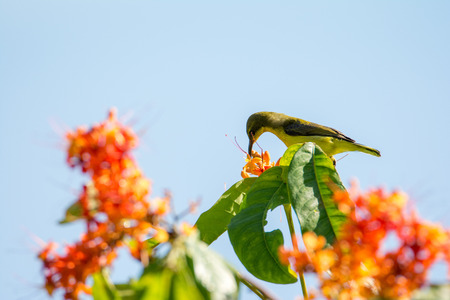 A small olive bird sits on a branch and eats a flower nectar