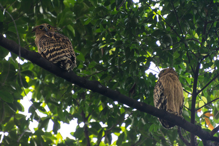 Two owls sit on a tree branch Stock Photo
