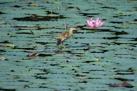 A small bird stands in a swamp on burdock