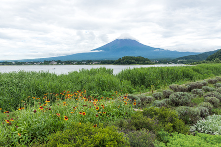 View of the Fuji mountain from the shore of the pond in the middle of a beautiful clearing with flowers. Japan