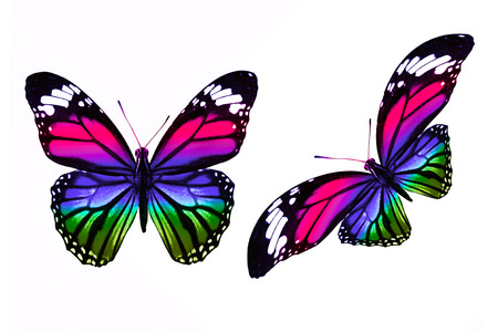set of colored butterflies isolated on white background
