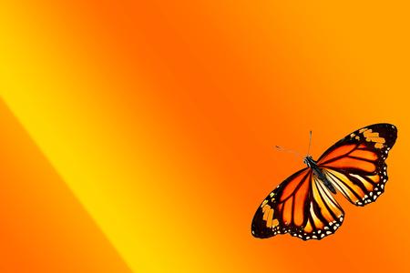 tropical orange butterfly on orange-yellow gradient background