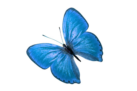 blue butterfly. isolated on white background 版權商用圖片
