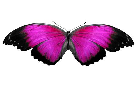 papillon violet. isolé sur fond blanc