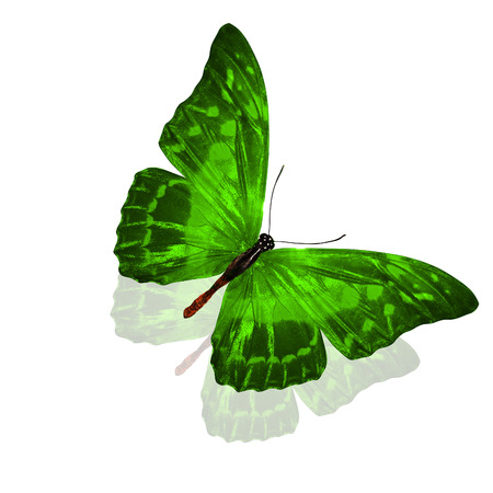 green butterfly. isolated on white background