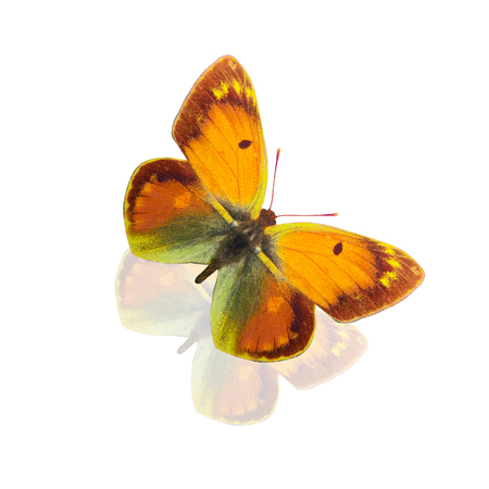 tropical butterfly with yellow and green wings,. isolated on white background
