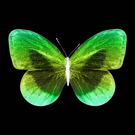 color butterfly isolated on black background Foto de archivo - 150553796