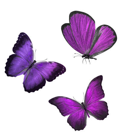 three color butterflies isolated on a white background. High quality photo