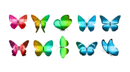 set of eight colored butterflies isolated on a white background. High quality photo Stock fotó