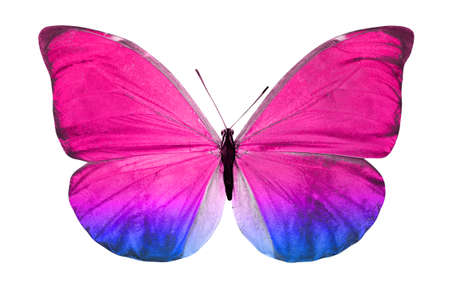 color butterfly isolated on a white background. High quality photo Banque d'images