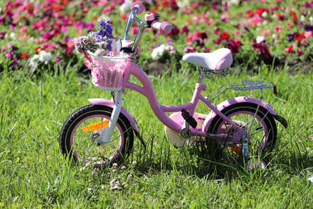 children pink bike in the park on the lawn with flowers