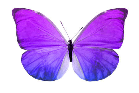 color butterfly isolated on a white background. High quality photo
