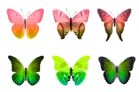 six color butterflies isolated on a white background. High quality photo Stock Photo