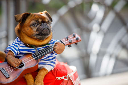 A dog with a guitar in his hands, in a sailors suit on the lap of a street musician Фото со стока